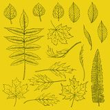 Set of vector autumn leaves drawn in thin lines Royalty Free Stock Image