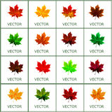 Set of vector, autumn leaves Royalty Free Stock Image