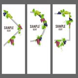 Set of vector banners with bunches of grapes. Invitation template or card
