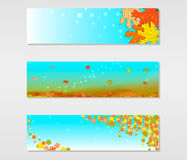 Set of vector banners with colored autumn maple leaves Stock Image