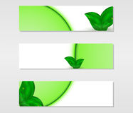 Set of vector banners with fresh green leaves with dew drops and green lines Royalty Free Stock Photos