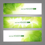 Set of vector banners with fresh green leaves Stock Photography