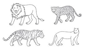 Set of vector big cats in contours Stock Photo