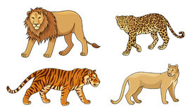 Set of vector big cats stock illustration