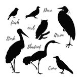 Set of vector bird icons. Set of bird black icons. Contour realistic birds. Owl and pigeon, shadoof and crow, finch and stork, vector illustration Stock Images