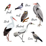 Set of vector bird icons. Colorful realistic birds. Owl and pigeon, shadoof and crow, finch and stork Royalty Free Stock Photos