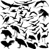 Set of vector birds. Set of vector silhouettes of flying birds Stock Photography