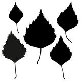 Set of vector black birch leaves outline Royalty Free Stock Photos