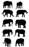 Set of vector black elephants Stock Photos
