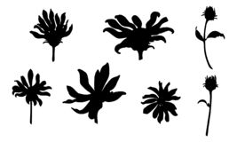 Set of vector black flowers isolated on white stock illustration