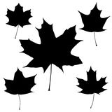Set of vector black maple leaves outline Royalty Free Stock Photography