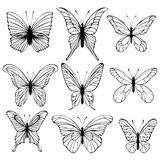 Set of vector butterflies. Collection of butterflies on white background. Vector Royalty Free Stock Images