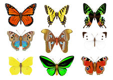 Set of vector butterflies Royalty Free Stock Photos