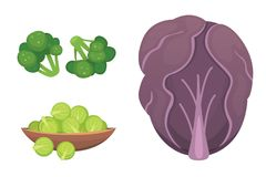 Set vector Cabbage and Lettuce. Vegetable green broccoli, kohlrabi, other different cabbages. Stock Image