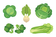 Set vector Cabbage and Lettuce. Vegetable green broccoli, kohlrabi, other different cabbages. Royalty Free Stock Photography