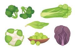 Set vector Cabbage and Lettuce. Vegetable green broccoli, kohlrabi, other different cabbages. Stock Images