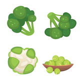 Set vector Cabbage and Lettuce. Vegetable green broccoli, kohlrabi, other different cabbages. Royalty Free Stock Photo