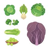 Set vector Cabbage and Lettuce. Vegetable green broccoli, kohlrabi  Stock Photography