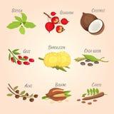 Set of Vector cartoon superfoods. Fresh fruits sketch background. Illustration for your design. Set of Vector cartoon superfoods. Fresh fruits sketch background Stock Images