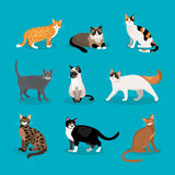Set of vector cats Stock Photography