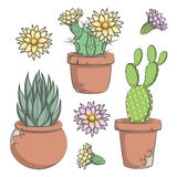 Set of vector colored cactus with flowers in old pots. EPS10 Royalty Free Stock Photography