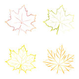 Set of vector colorful maple leaves Royalty Free Stock Images