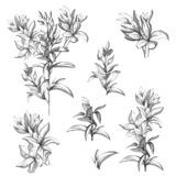 Set of vector contour flowers on a white background. Sketches of the isolated flowers drawn by ink. Contour Clipart for summer. Design and colorings royalty free illustration