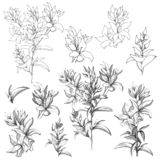 Set of vector contour flowers on a white background. Sketches of the isolated flowers drawn by ink. Contour Clipart for summer. Design and colorings vector illustration