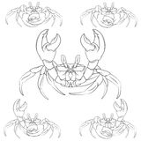 Set of vector crabs illustrations. EPS10 Stock Photos