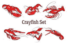 Set of vector crayfish illustrations drawn in ink. Splattered seafood concept on white background. Royalty Free Stock Photography