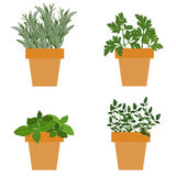 Set of vector culinary herbs in pots with fresh thyme basil, ros Royalty Free Stock Photos
