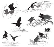Set of vector scenes of eagle life. Set of vector cut out scenes of eagle silhouettes in black color on white background. Relationship of eagles Royalty Free Stock Photo