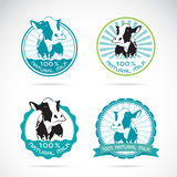 Set of vector an dairy cows label. On white background Royalty Free Stock Photography