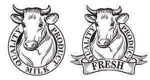 Set of vector an dairy cows label Stock Photos