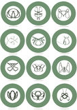 Set of Vector design,  abstract animals. Icon Set of abstracts animals. Abstract nature animals on circles. Cat, dog, bug, snake,pig, fly. fish Royalty Free Stock Photo