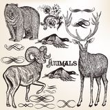 Set of vector detailed animals for design Royalty Free Stock Photo