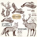 Set of vector detailed animals for design Stock Photo