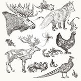 Set of vector detailed animals and flourishes for design Stock Photography