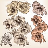 Set of vector detailed flowers for design Royalty Free Stock Image