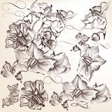 Set of vector detailed hand drawn flowers Royalty Free Stock Photo