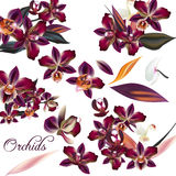 Set of vector detailed orchid flowers. A collection of vector realistic tropical orchid flowers for design Royalty Free Stock Image