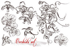 Set of vector detailed orchid flowers. Set of vector hand drawn orchids flowers in engraved vintage style Royalty Free Stock Photography