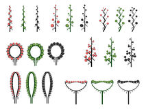 Set of vector different types of inflorescence. Set of vector different types of inflorescence, scientific scheme of flower on stalk (botany), isolated on white Royalty Free Stock Photography