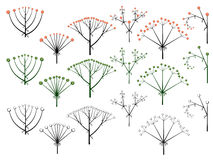 Set of vector different types of inflorescence. Royalty Free Stock Images