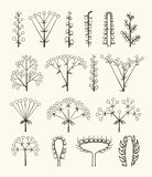 Set of vector different types of inflorescence Royalty Free Stock Photography