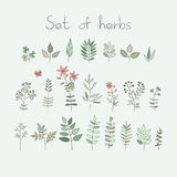 Set of vector doodle herbs and flowers Stock Image