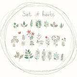 Set of vector doodle herbs Royalty Free Stock Photo