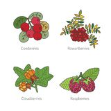 Set of vector doodle pied berries isolated on white Stock Photos