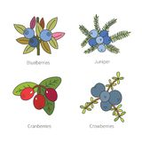 Set of vector doodle pied berries isolated on white Stock Images