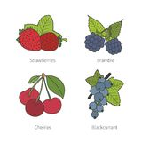 Set of vector doodle pied berries isolated on white Stock Photo